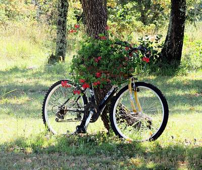 Photograph - Flower Bicycle by Vesna Martinjak