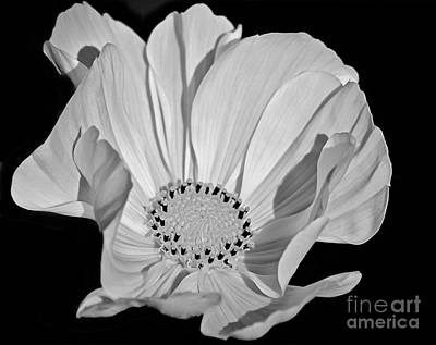 Photograph - Flower Black And White by Corlyce Olivieri