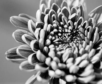 Photograph - Flower Black And White by Jill Reger