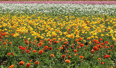 Photograph - Flower Blanket From Carlsbad by Viktor Savchenko