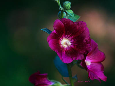 Photograph - Flower Bloom by Edward Peterson