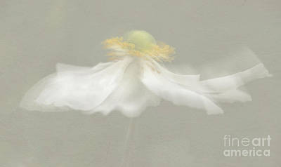White Flower Photograph - Flower Blur by Amanda Elwell
