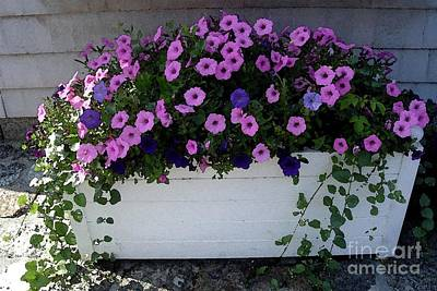Photograph - Flower Box Pink Petunias by Patricia E Sundik