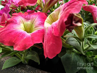 Photograph - Flower Buddies by Robert Knight