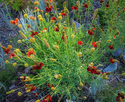 Photograph - Flower Burst by John Brink