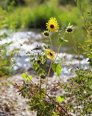 Photograph - Flower By Stream by Dart and Suze Humeston