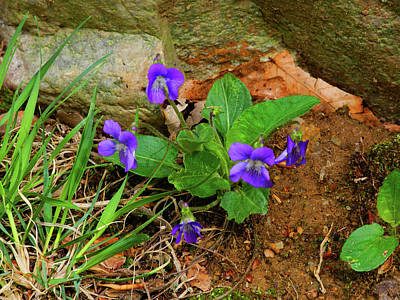 Photograph - Flower C On Maryland Appalachian Trail by Raymond Salani III