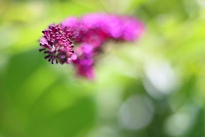 Photograph - Flower by Carol Montoya