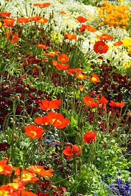 Photograph - Flower Carpet 4 by Rudi Prott
