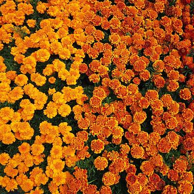 Anne Geddes Large Format Polaroids -  Flower carpet by Vesna Martinjak