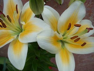 Tiger Lillies Photograph - Flower Close Up 5 by Anita Burgermeister