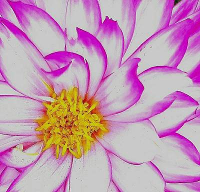 Photograph - Flower Close Up by Jesus Nicolas Castanon