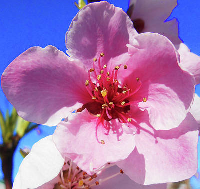 Royalty-Free and Rights-Managed Images - Flower Close Up Pink Blossom by Irina Sztukowski