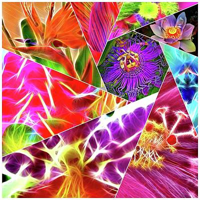 Photograph - Flower Collage by Gini Moore