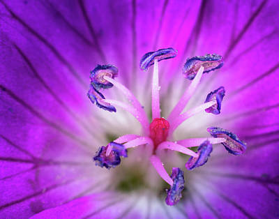 Photograph - Flower Color Explosion by Brian Caldwell