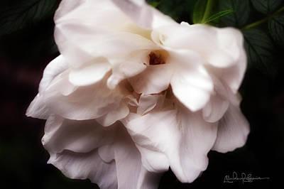 Photograph - Flower Csc 8663 by Michael Soaries
