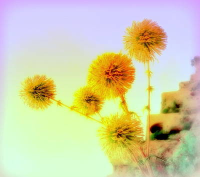 Be My Yellow Flower   Art Print by Hilde Widerberg