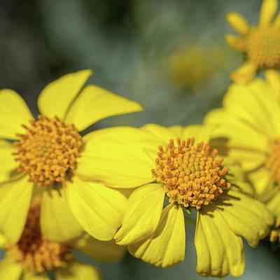 Photograph - Flower by Dan McManus