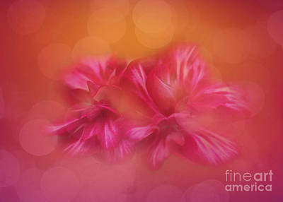 Photograph - Flower Dance by Judi Bagwell