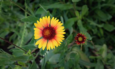 Photograph - Flower by Dennis Reagan