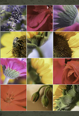 Quilt Collage Photograph - Flower Dozen by Janet Fikar