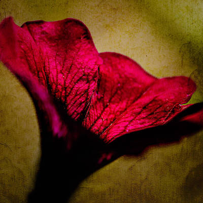 Photograph - Flower Dream #10 by John Brink