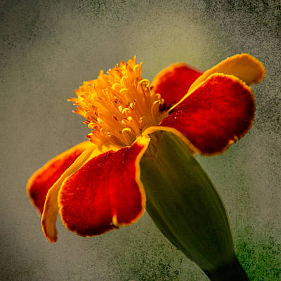 Photograph - Flower Dream #14 by John Brink