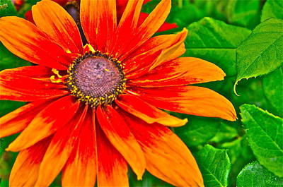 Photograph - Flower Effects #1 by Joe  Burns