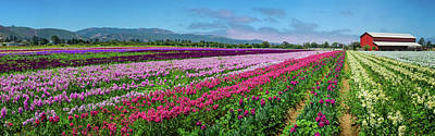 Photograph - Flower Farm Heaven Panorama by Lynn Bauer