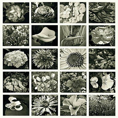 Flower Favorites Bw Print by Gwyn Newcombe