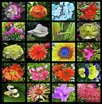 Quilt Collage Photograph - Flower Favorites by Gwyn Newcombe