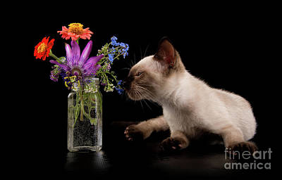 Photograph - Flower Feline by Sari ONeal