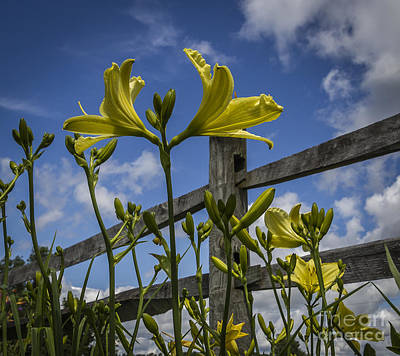 Photograph - Flower Fence by Joann Long