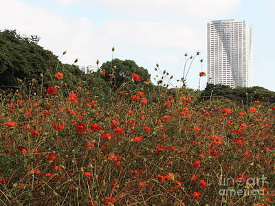 Photograph - Flower Field In Hama-rikyu Gardens by Carol Groenen
