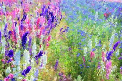 Photograph - Flower Field by Tim Gainey