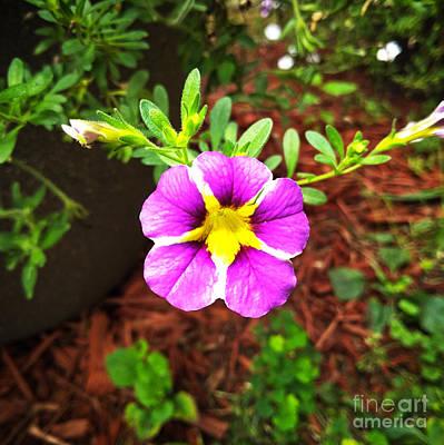 Photograph - Flower Focal by Robert Knight