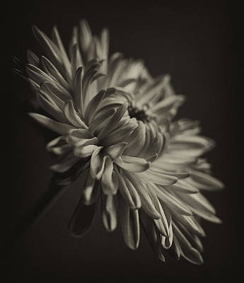 Balck And White Photograph - Flower From Another Century by Robert Ullmann