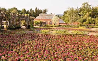 Photograph - Flower Garden by Allen Nice-Webb