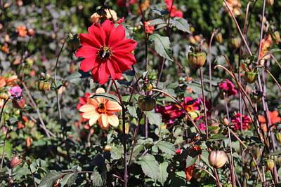 Photograph - Flower Garden by Jason Nicholas