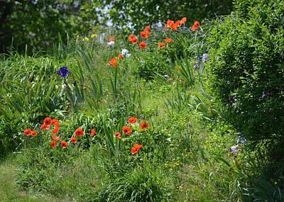 Photograph - Flower Garden by rd Erickson
