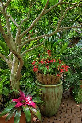 Photograph - Flower Garden Series Y6812 by Carlos Diaz