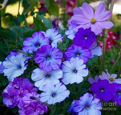 Photograph - Flower Garden by Terri Thompson
