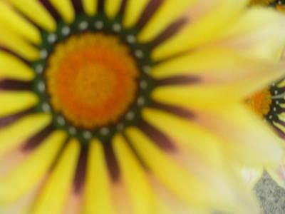One Wall Art - Photograph - Flower Gazing At You by Anamarija Marinovic