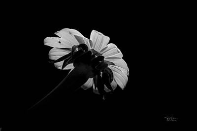 Photograph - Flower Glow by Bill Posner