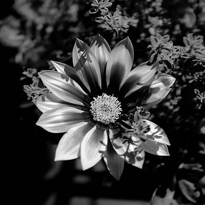 Photograph - Flower Glow Black And White by Ron White