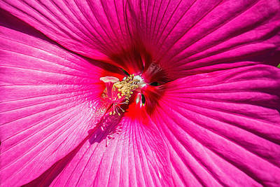 Stamen Digital Art - Flower - Hibiscus - Vibrant Pink by Black Brook Photography