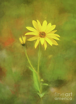 Photograph - Flower Impression by Sharon Seaward