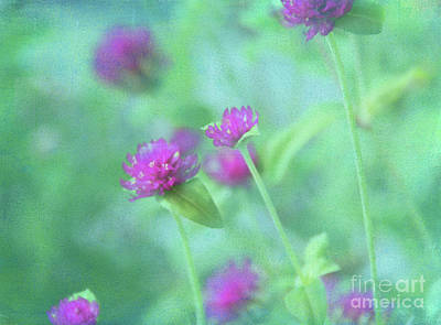 Photograph - Flower Impressions by Judi Bagwell