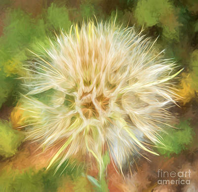 Photograph - Flower Impressions by Sharon Seaward