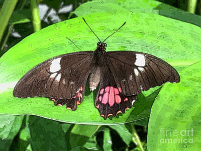 Photograph - Flower Imprint On Wing by Ruth H Curtis
